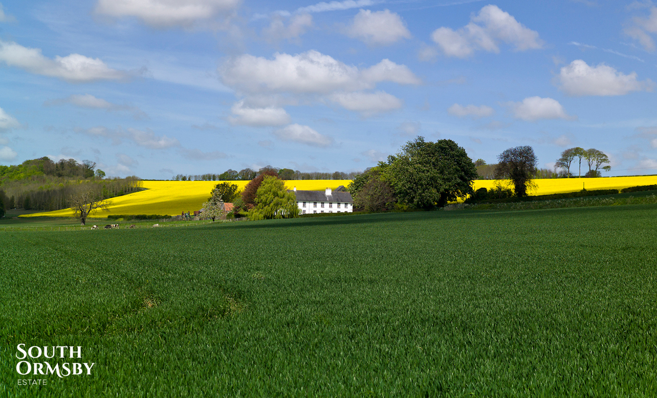 A field in the Lincolnshire Wolds