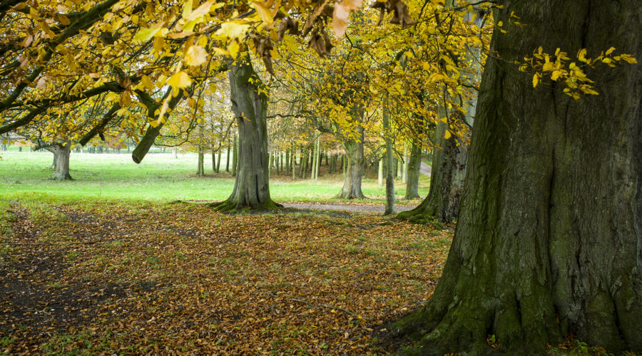 South Ormsby Estate in autumn - close up of wooded area with fallen leaves on the floor