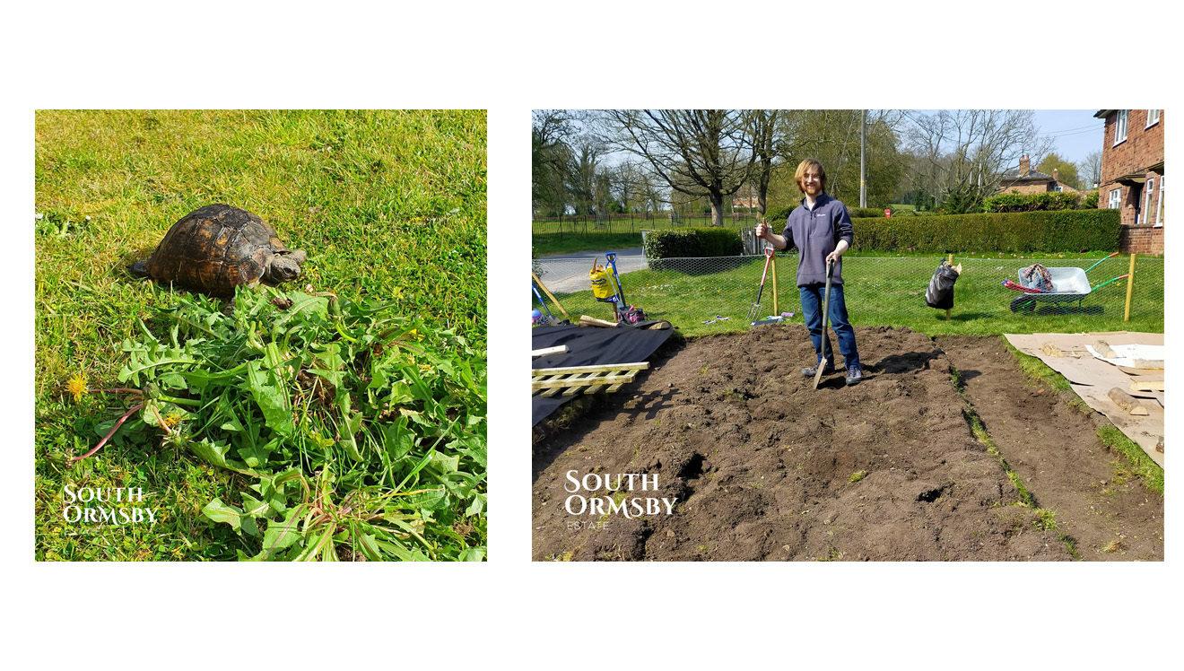 Toit the tortoise and Toby Ridsdale, Community Vegetable Gardener