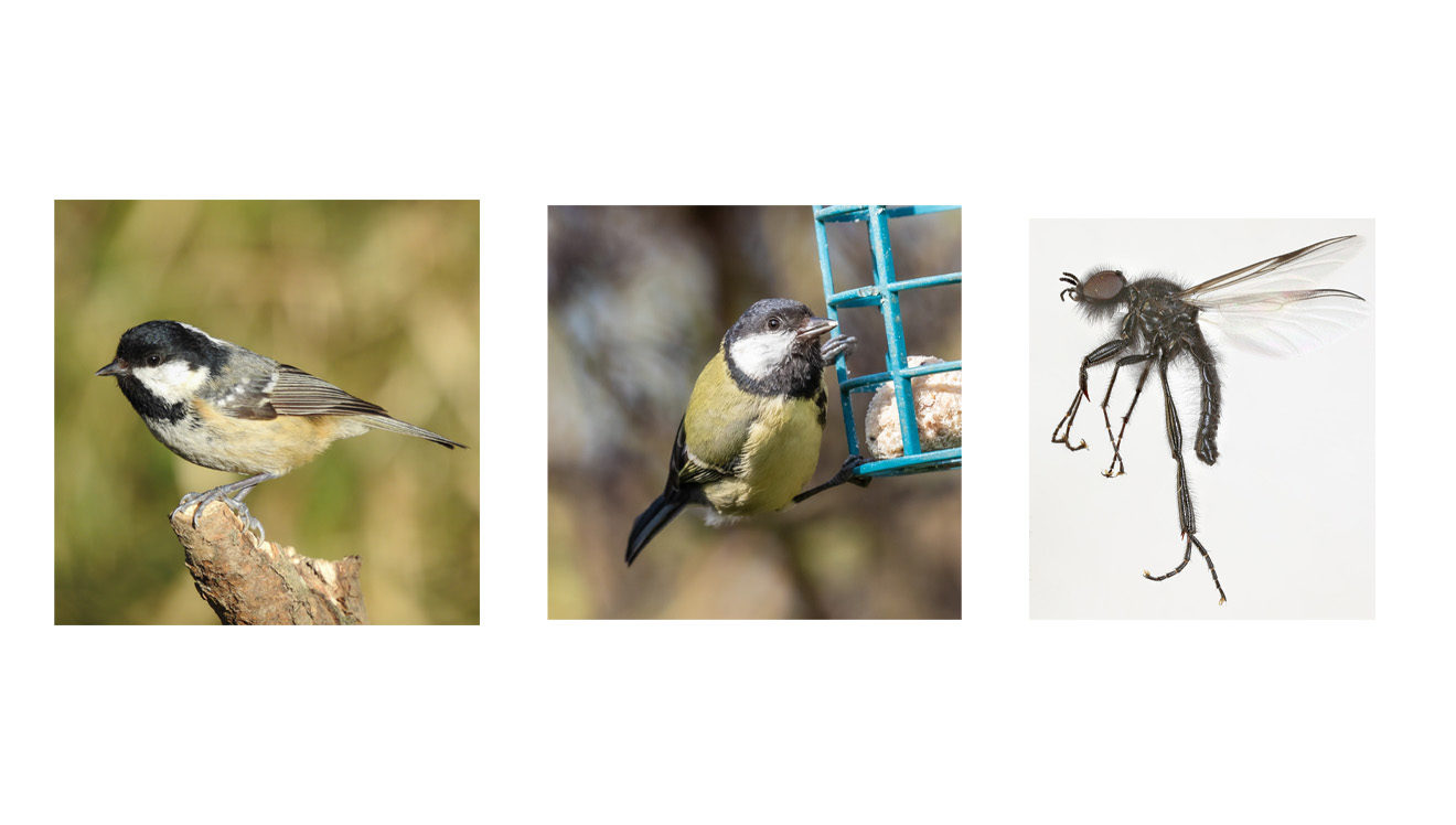 Collage Of Birds & Insect