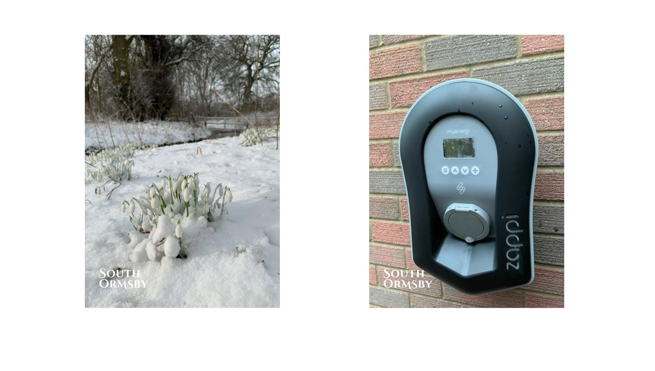 snowdrops in snow & Zappi charger