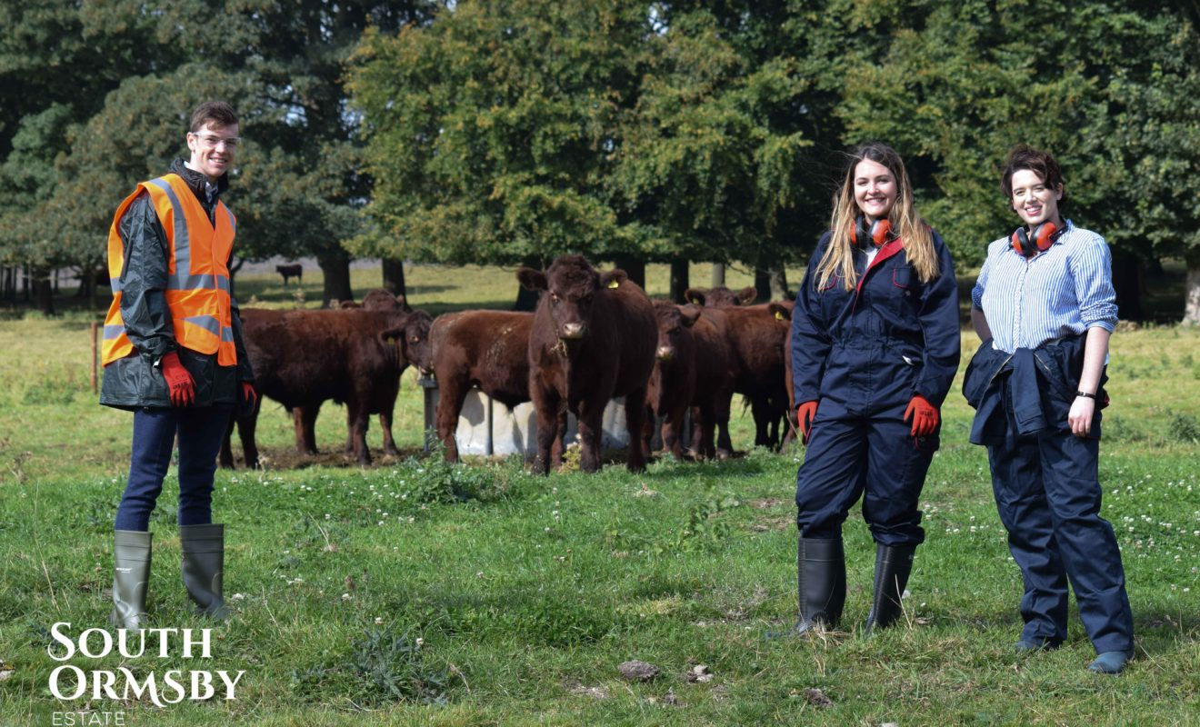 The team that look after the Lincoln Red Cattle