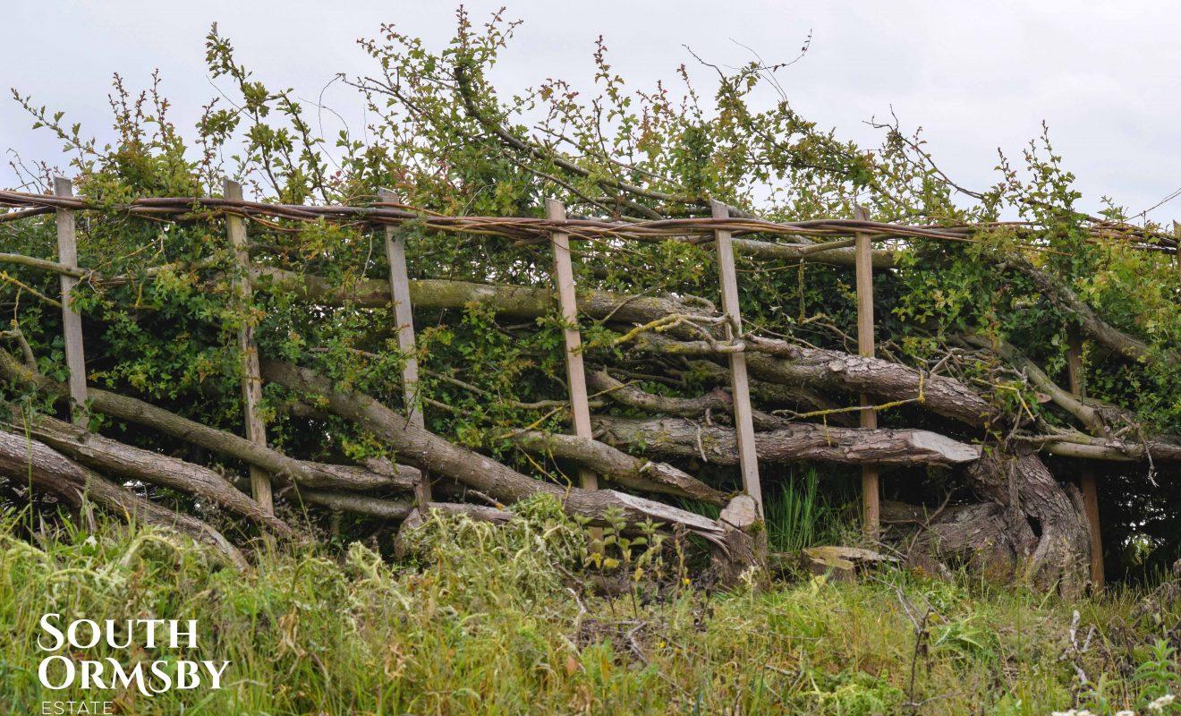 Estate hedgerows after Plashing